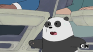 S02 Baby Bears on a Plane (236)