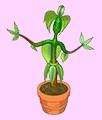 Strike a Pose Plant