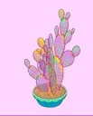 Rainbow Jelly Cactus