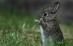 File:ANT Ava's Bunny.jpg