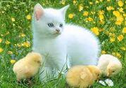ANT Ava's Kitten and Chicks