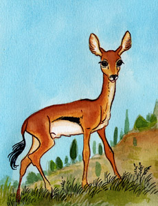 Etrurian gazelle