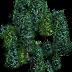 Forestterrainicon