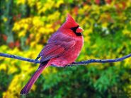 Birds wallpapers bird-Beautiful-wallpapers