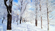 Winter-in-the-park-16501-1920x1080