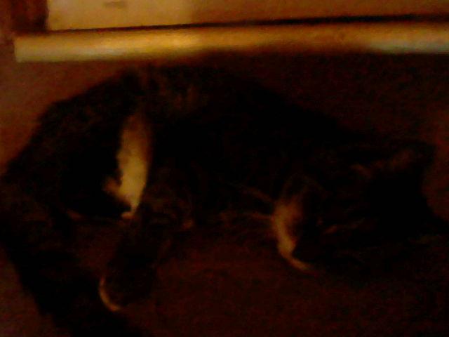 File:Pita at upstairs door.jpg