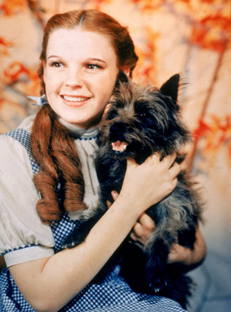 File:Dorothy the wizard of oz-11607.jpg