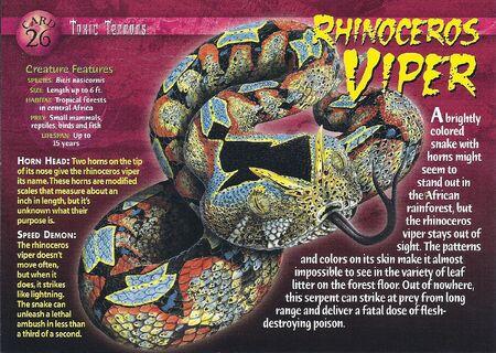 Rhinoceros Viper front