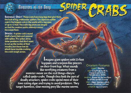 Spider Crabs front
