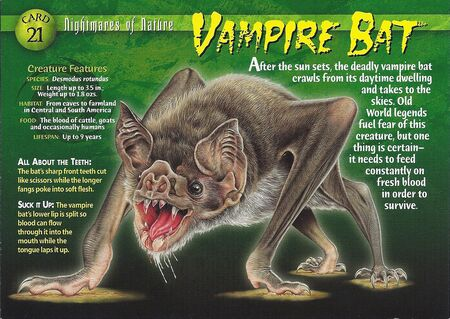 Vampire Bat front