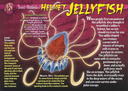 Helmet Jellyfish front