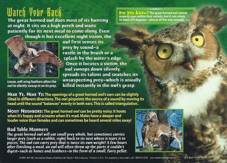 Great Horned Owl back