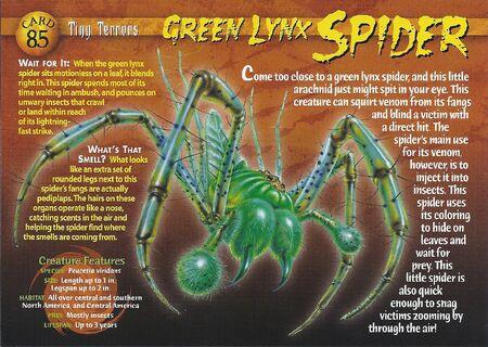 Green Lynx Spider front