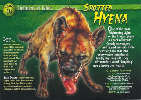 Spotted Hyena front