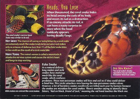 Coral Snake back