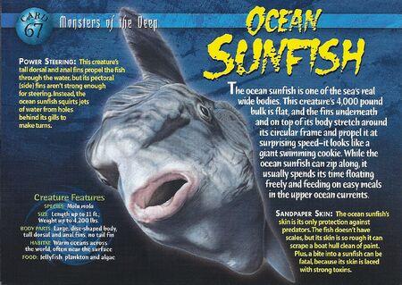 Ocean Sunfish front