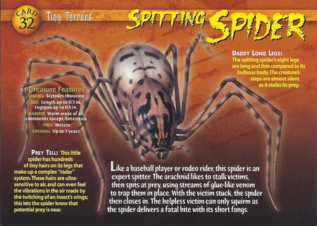 Spitting Spider front
