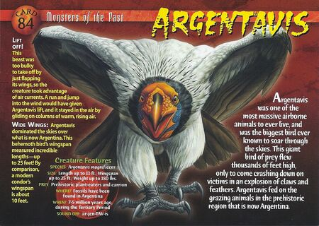 Argentavis front