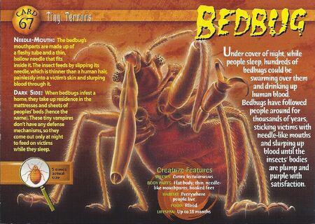 Bedbug front