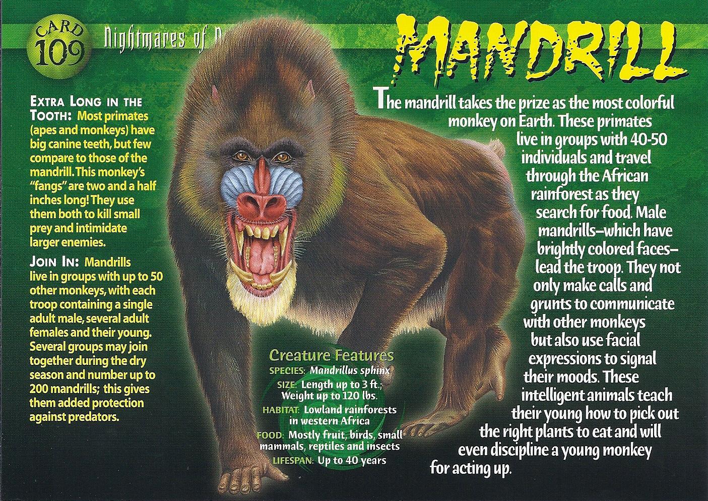 Mandrill Wierd N Wild Creatures Wiki Fandom Powered By
