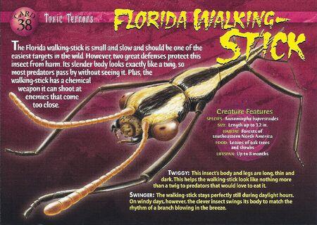 Florida Walking-Stick front