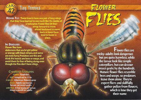 Flower Flies front