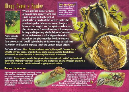 Pirate Spiders back