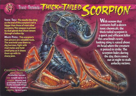 Thick-Tailed Scorpion front