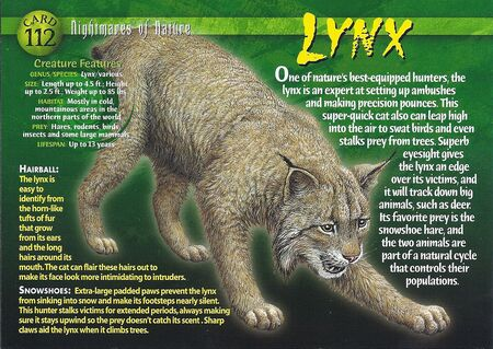Lynx front