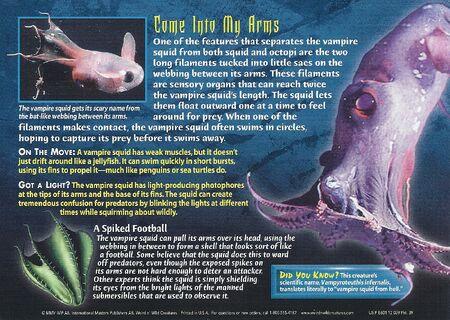 Vampire Squid back