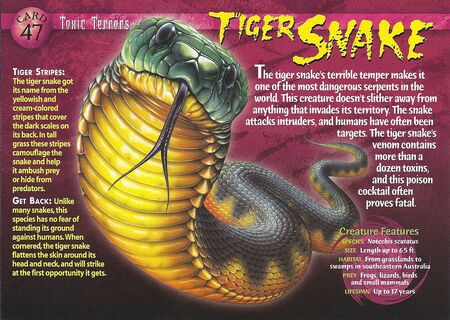 Tiger Snake front
