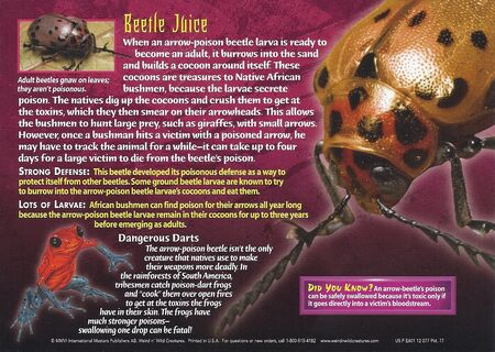 Arrow-Poison Beetle back