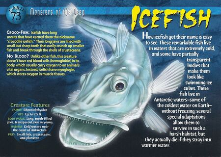 Icefish front