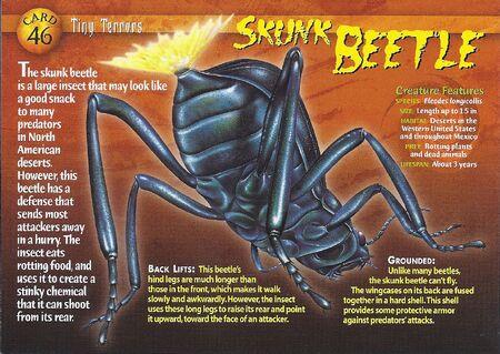 Skunk Beetle front