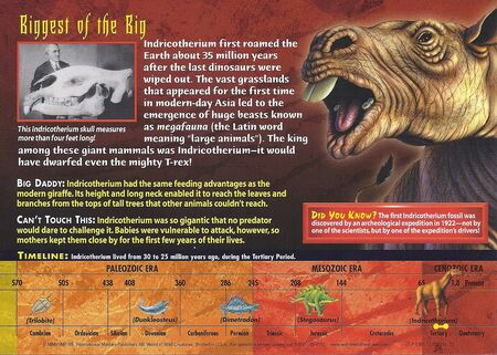 Indricotherium back