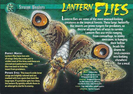 Lantern Flies front