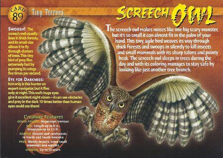Screech Owl front
