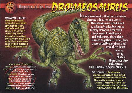 Dromaeosaurus front