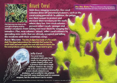 Fire Coral back