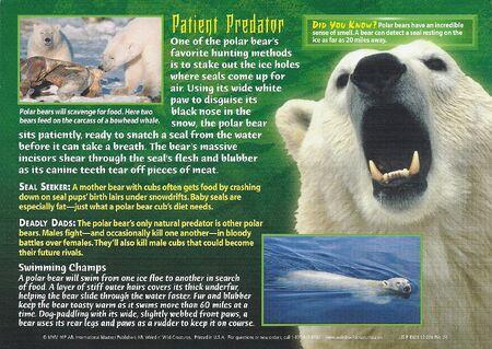 Polar Bear back