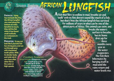 African Lungfish front