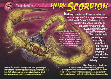 Hairy Scorpion front