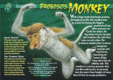 Proboscis Monkey front
