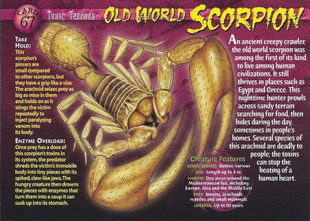 Old World Scorpion front