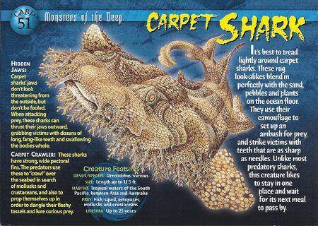 Carpet Shark front