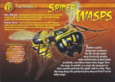 Spider Wasps front