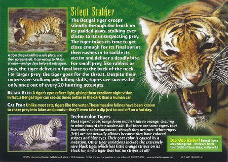 Bengal Tiger back