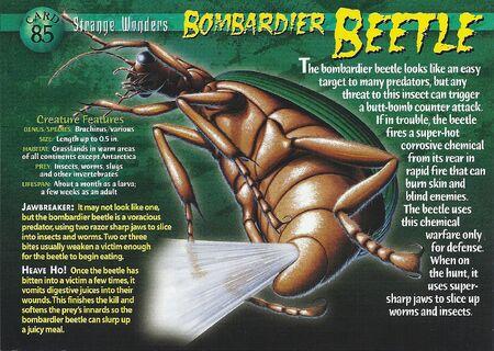 Bombardier Beetle front