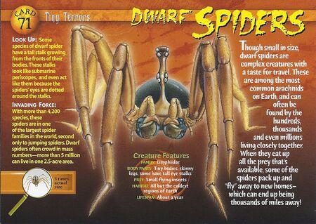 Dwarf Spider front