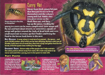 Common Wasp back